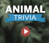 Hra - Animal Trivia