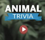 Hra - Animal Trivia