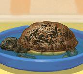 Hra - Pečování o želvu
