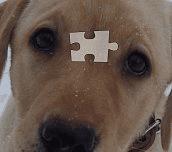 Hra - Puzzle pejsek