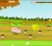 Hra - Pig Race
